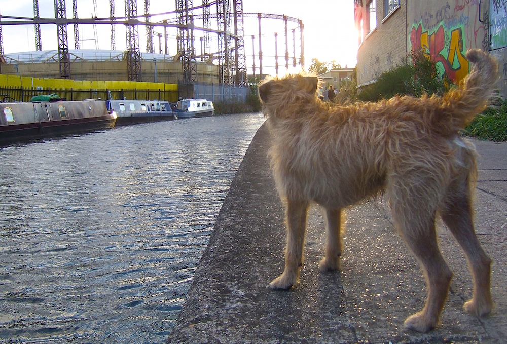 dog on the canal